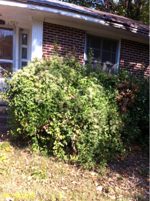 shrub-trimming-6
